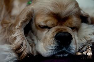 Jack Jack Sleeping